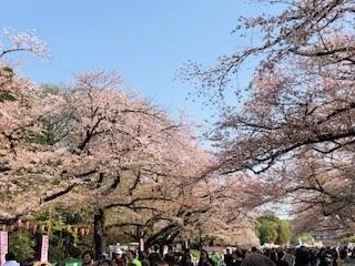 「うえの桜フェスタ」で奉仕活動をしました