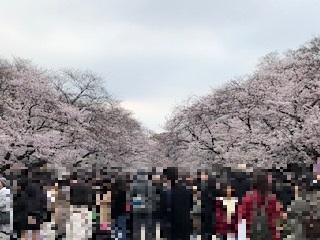 東京上野ライオンズクラブのボランティア活動~うえの桜フェスタ~